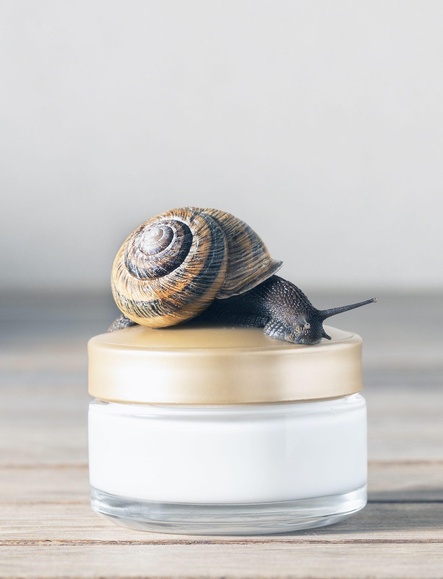 Best Snail creams