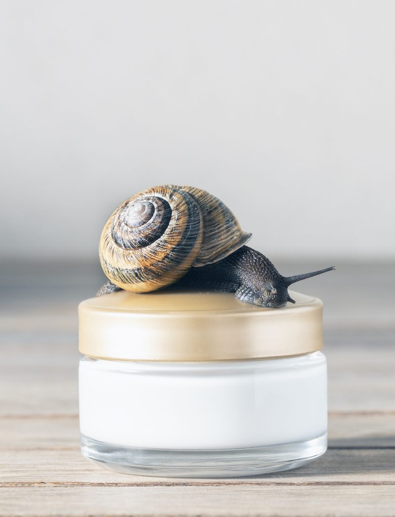 Best Snail creams